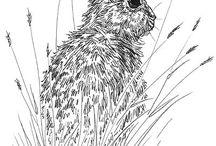 Illustration / Inspiring illustrations