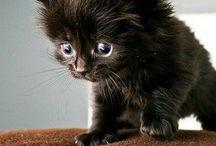 Katt  - Nydelig