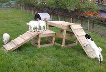 Goat enclosures