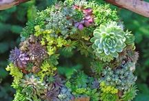 Succulents / by Paper Garden Projects