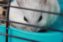 algunas tomas de mis hamster
