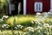 Traditional swedish summer