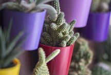Mini pots and planters / Pots and planters