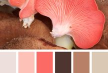 Palette Colours