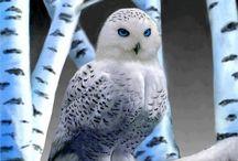 Owls / by Martina Fuchs
