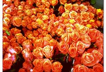 Roses / Yellow. Orange