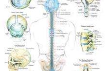 Craniosacral