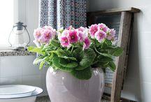 Voorjaarsplanten / Grandioze bloeiende planten voor in uw huis