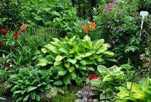 Trädgård / Rabatt