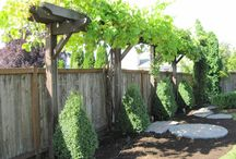 backyard plans / by Liz Colver