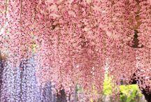 Beautifull :))