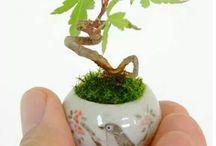 tanaman / pengen nih