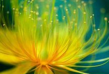 Blommor närbilder