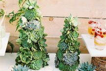 Succulents / by Darla De Matteo