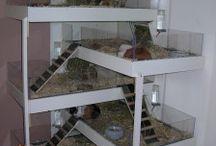 hamster paradijs