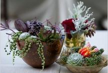 Plants / by Robyn Kirsch
