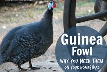 Guinea Fowl / by Going Green