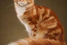 Gatti / Foto sui gatti