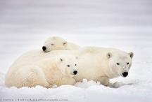 Alaska / by Sabrina Swann-Warren