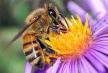 Salva a las abejas