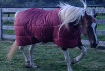 Horse Blankets, Sheets & Coolers / GrandEntrySaddlery.com has great prices on quality horse blankets, Sheets & Coolers. CLICK HERE: http://www.grandentrysaddlery.com/blankets-sheets/