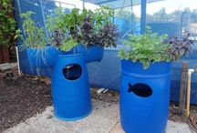 Aquaponics / Aquaponics creates is a cutting-edge growing method where plants and fish grow in tandem. Great for the planet - and produces vegetables that grow and taste fantastic!