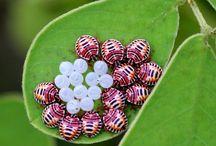 bugs / by deborah helene