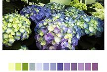 Nature . Palette
