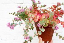 Home goods wish list(books, plants,etc)
