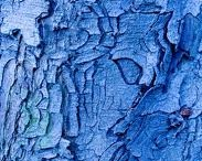 Texture in Nature / by Rebecca Lazenby