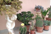 Giardini / Tutto ciò che riguarda giardini e piante