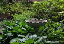 Hosta La Vista / Here in Zone Five and a Half the reliable hosta thrives, yet diverse varieties makes them far from ordinary.