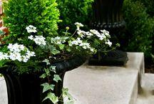 verandah planting pots
