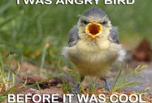 Funny animals / Gewoon grappig