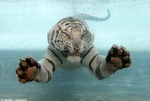 Felines / by Lygea Robbins