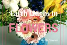 Flower Quotes / The beautiful bouquets of Flowers of the Field in Las Vegas showing just how inspiring flowers can be.