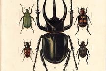 Antikke bilder av insekter