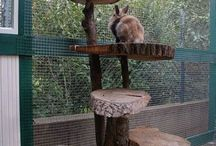 rabbit ideas for own enclosure