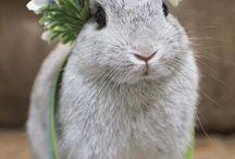 Bunny♡