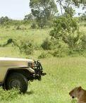 Experience The Adventure In Masai Mara Wildlife Reserve