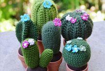 Kaktuchy