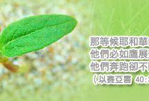 Meditation 靈修默想 / by 基督教新媒體運動