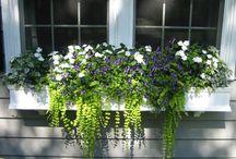 GARDEN  Planter Boxes & Baskets / by Diane Salter