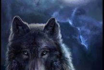WOLF - FARKAS