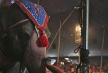Carson & Barnes Circus Photos / Photos of Carson & Barnes performances.
