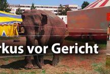 Tiere gehören nicht in den Zirkus