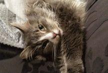 Cats dozing - go Miu !!!