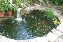 Goldfish Pond Ideas
