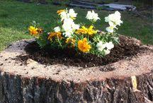 сад-огород Garden