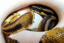 Reptiles Aterra34